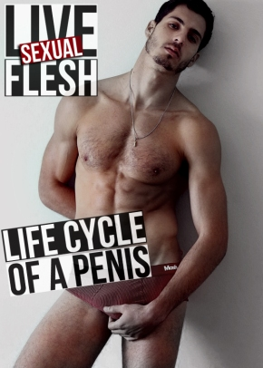 LIFE CYCLE OF A PENIS_01